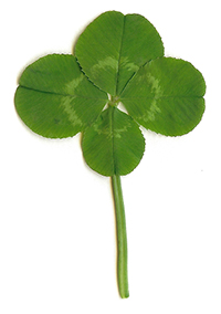 4 leaf clover