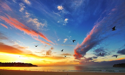 bondi-sunrise-birds