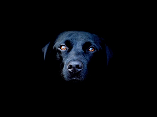 How To Ditch Depression and Get a Life: 8 Ways to Deal with the Black Dog